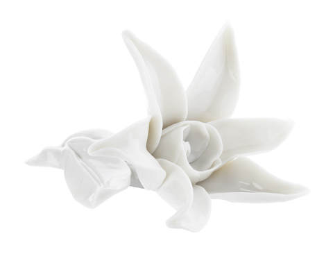 12.043_star_flower_white_main