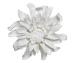 19174_chrysanthemum_small_white_copy_small_carousel